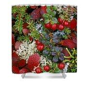 Alaskan Berries 2 Shower Curtain