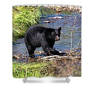Alaskan Black Bear Hunting In A River Shower Curtain