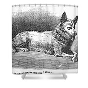 Alaskan Husky Shower Curtain by Granger