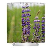 Alaskan Lupines Shower Curtain
