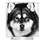 Alaskan Malamute Portrait Shower Curtain
