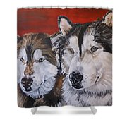 Alaskan Malamutes Shower Curtain