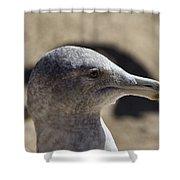 Albatross- Hawaii Shower Curtain