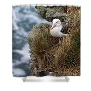 Albatross Rookery Shower Curtain