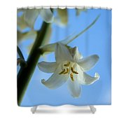 Albino Bluebells 2 Shower Curtain