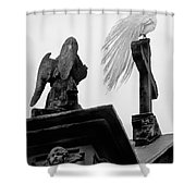 White Peacock.isola Madre-bw Shower Curtain