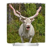 Albino Reindeer Shower Curtain