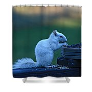 Albino Squirrel Shower Curtain