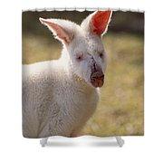 Albino Wallaby Shower Curtain