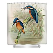 Alcedo Ispida Plate From The Birds Of Great Britain By John Gould Shower Curtain