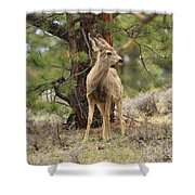 Alert In The Rockies Shower Curtain