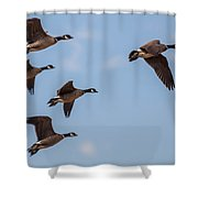 Aleutian Geese Shower Curtain