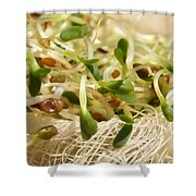 Alfalfa Sprouts Shower Curtain