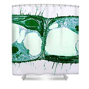 Algae Cell Division, Cylindrocapsa Shower Curtain