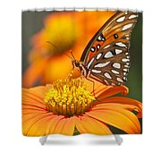 All About Orange 3236 3 Shower Curtain