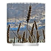 All About Wheat Shower Curtain