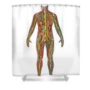All Body Systems In Male Anatomy Shower Curtain