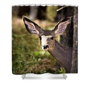 All Ears - Mule Deer Fawn - Casper Mountain - Casper Wyoming Shower Curtain