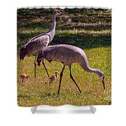 All Family Shower Curtain