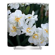 All In White Shower Curtain