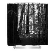 All Is Quiet Shower Curtain