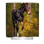 All Legs And Attitude Shower Curtain