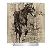 All Legs Sepia Shower Curtain