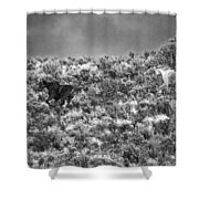 All Out Gallop Shower Curtain