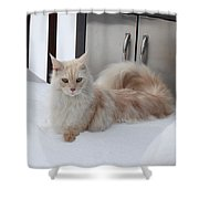 All Paws On Deck Shower Curtain