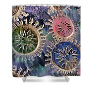 All Points Shower Curtain
