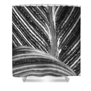 All Roads Lead...bw Shower Curtain