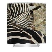 All Stripes Zebra 2 Shower Curtain