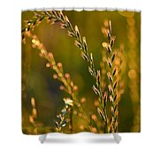 All That Glitters Is Gold Shower Curtain