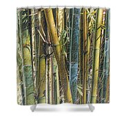 All The Colors Of The Bamboo Rainbow Shower Curtain