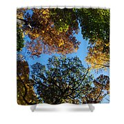 All The Trees Of The Forest Shower Curtain