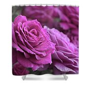 All The Violet Roses Shower Curtain