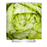 All The Year Round Shower Curtain by Anne Gilbert