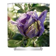 All Things Purple Shower Curtain