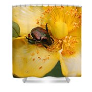 All You Can Eat... Shower Curtain