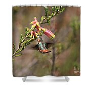 Allen Hummingbird In Flight Shower Curtain