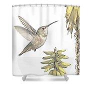 Allen's Hummingbird And Aloe Shower Curtain
