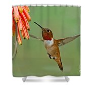 Allens Hummingbird At Flowers Shower Curtain
