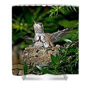 Allens Hummingbird Chicks Shower Curtain