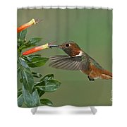 Allens Hummingbird Feeding Shower Curtain
