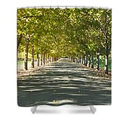Alley Of Trees On A Summer Day Shower Curtain
