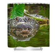 Alligator 2 Shower Curtain