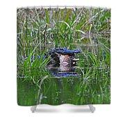 Alligator Appetite Shower Curtain