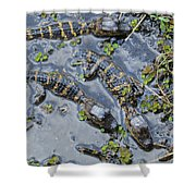 Alligator Babies IIi Shower Curtain