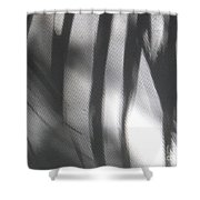 Alligator Creek Sunrise Shadows Shower Curtain