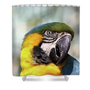 Alligator Farm Resident Shower Curtain